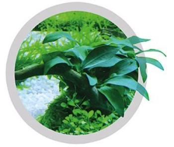 Carbon dating planten