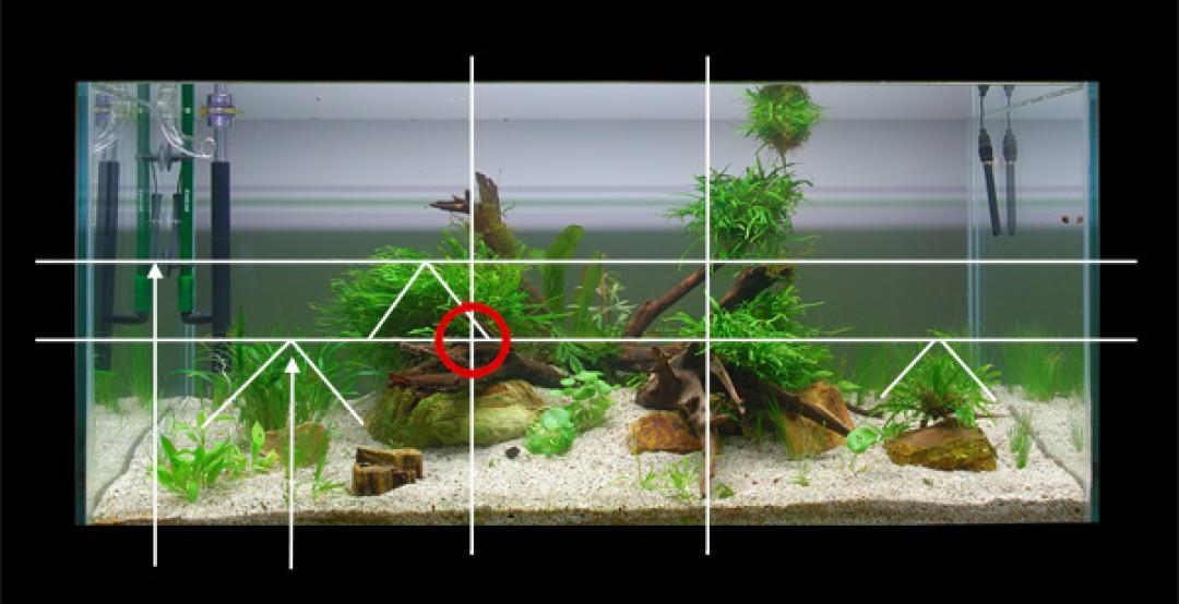 Aquarium Ideeen Inrichting.Aquascaping Theorie En Praktijkvoorbeeld Easy Life